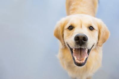 We are a DOG COMPANY